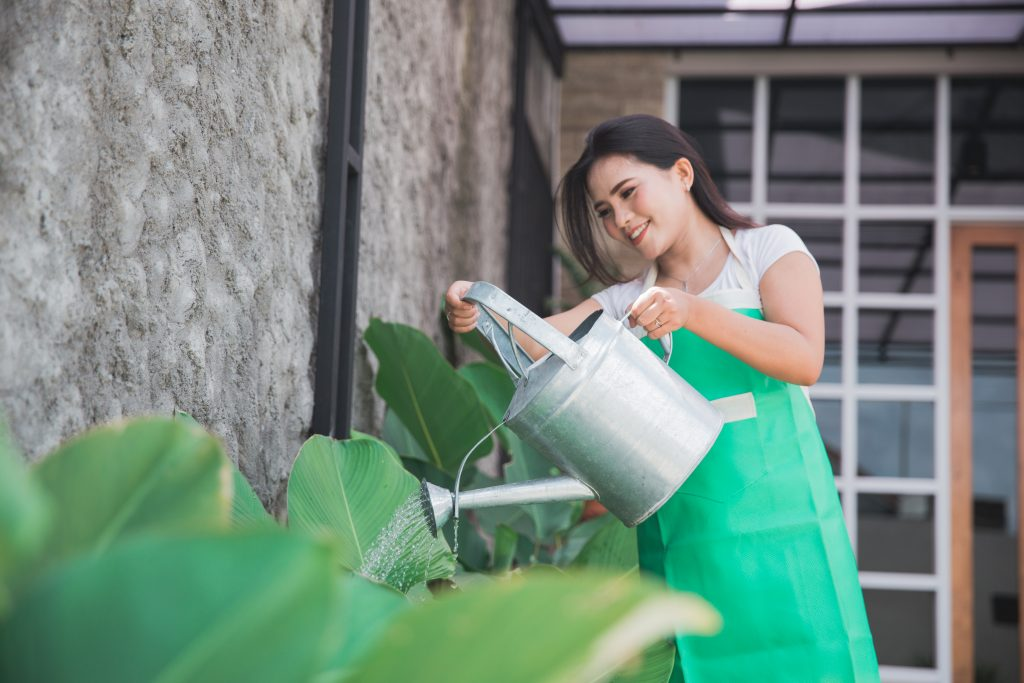 House sitter watering plants